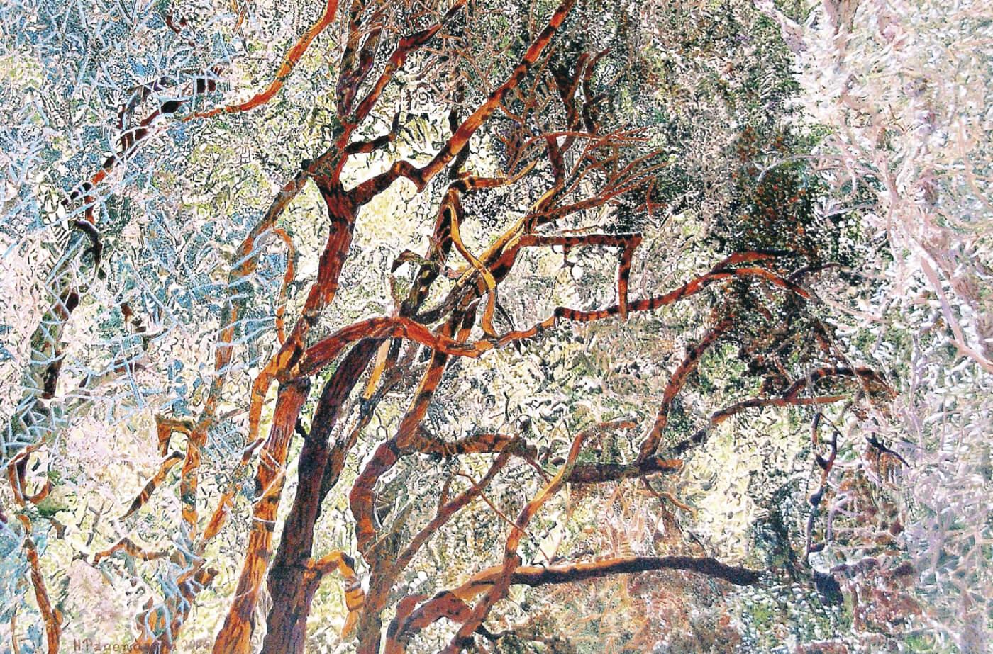 Baum, Mallorca, Sommerwind, Zitronenbaum