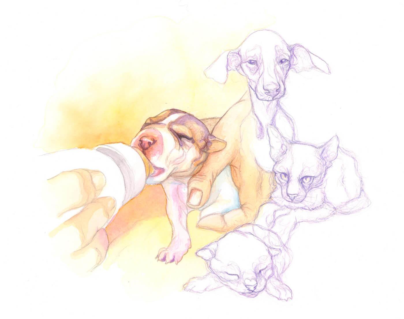 Hundebaby, Aquarell, animaldrawing