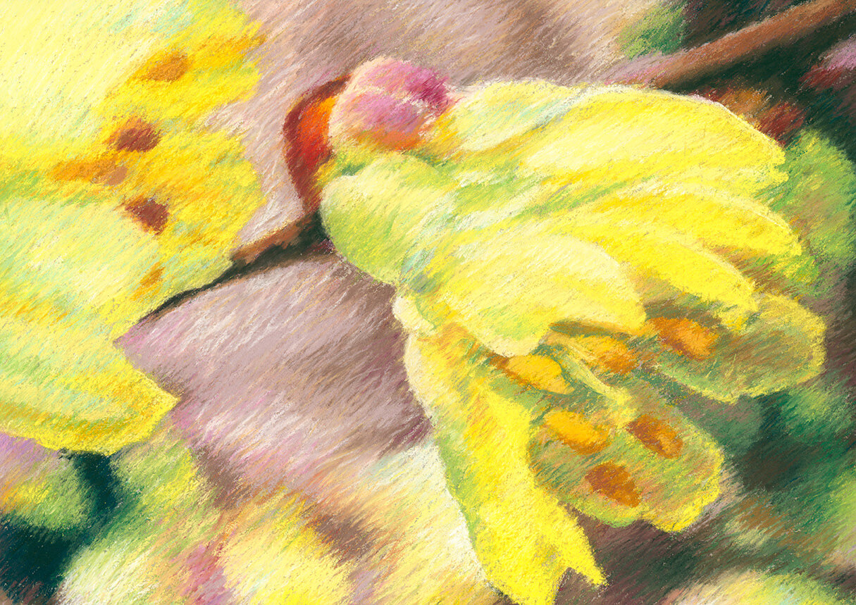Frühjahrsblüher, Stillleben, Form und Farbe, Pastell