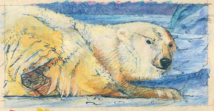 Icebear illustration Akadmie Leonardo