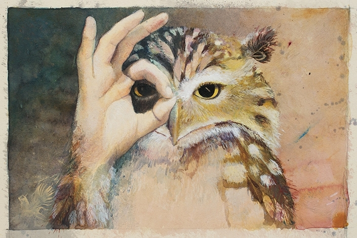 Eule Owl illustration Studium Akademie Leonardo